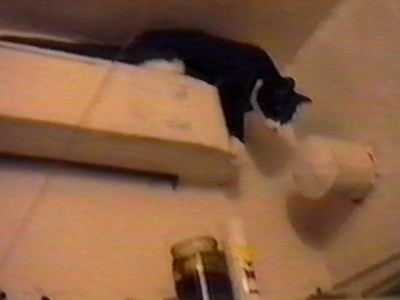 Cat on high shelf falls off