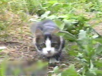 Tiny kitten in garden pounces at camera