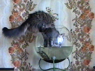 Cat gets in terrapin bowl & drinks water