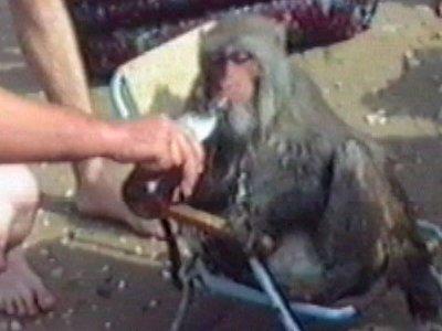 Monkey drinking beer