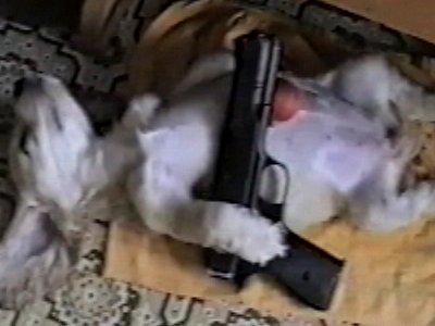 Dog asleep with gun