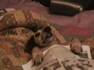 Dog with glasses sleeps in newspaper