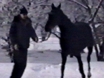 Horse slips over in snow